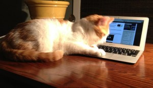 Cat-based cyber-security solution